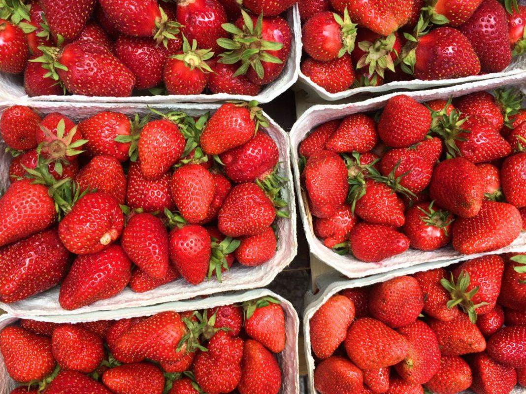 Frische, regionale Erdbeeren. Foto: Anna Gerner