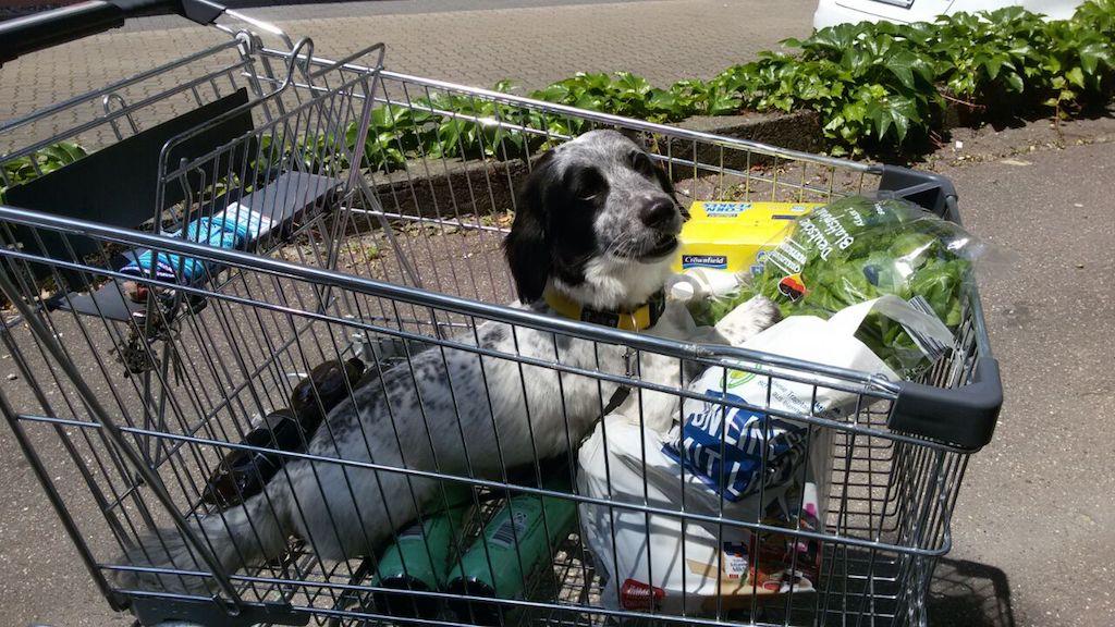 Manchmal hat man als Hund in Würzburg doch Spaß. Foto: Nicole Weber