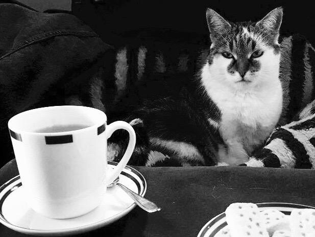 Katzencafé - auch Idee für Würzburg? Foto: Larissa Noack