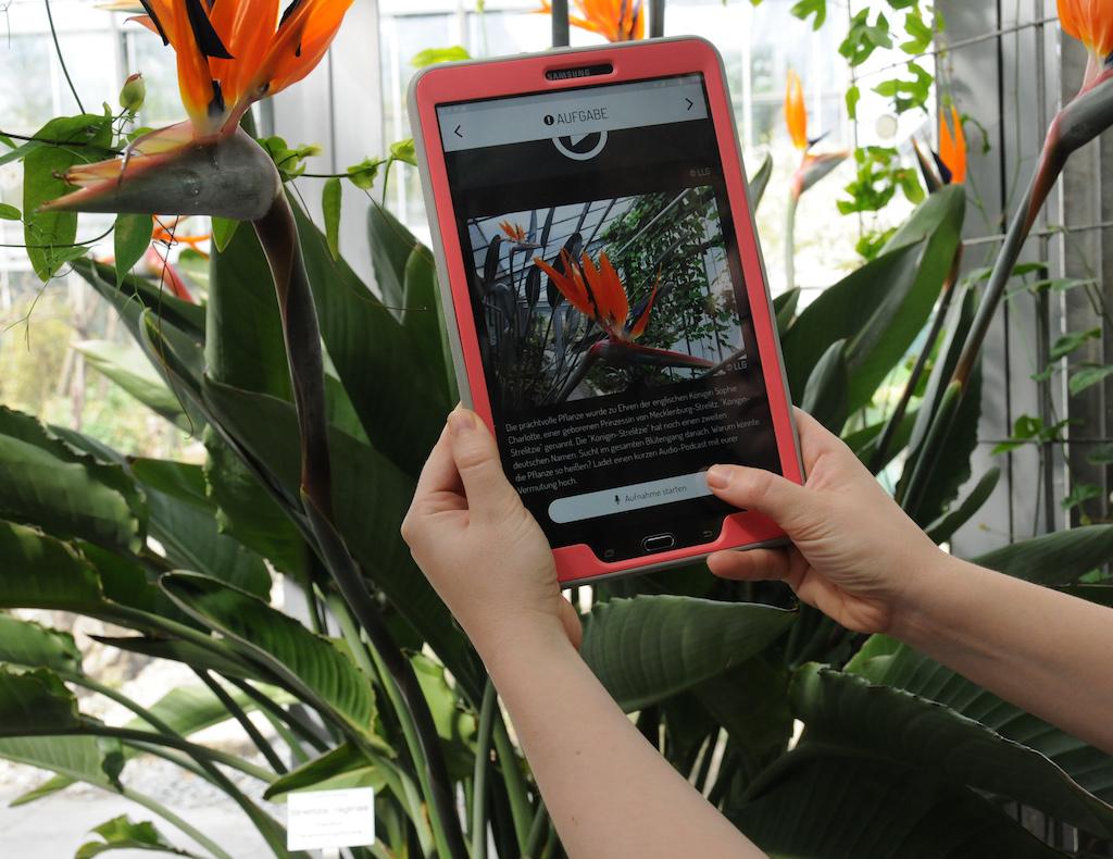 Wissenswertes über die Paradiesvogelblume erfährt man bei der Smartphone-Ralley durch den Botanischen Garten. Foto: Judith Küfner