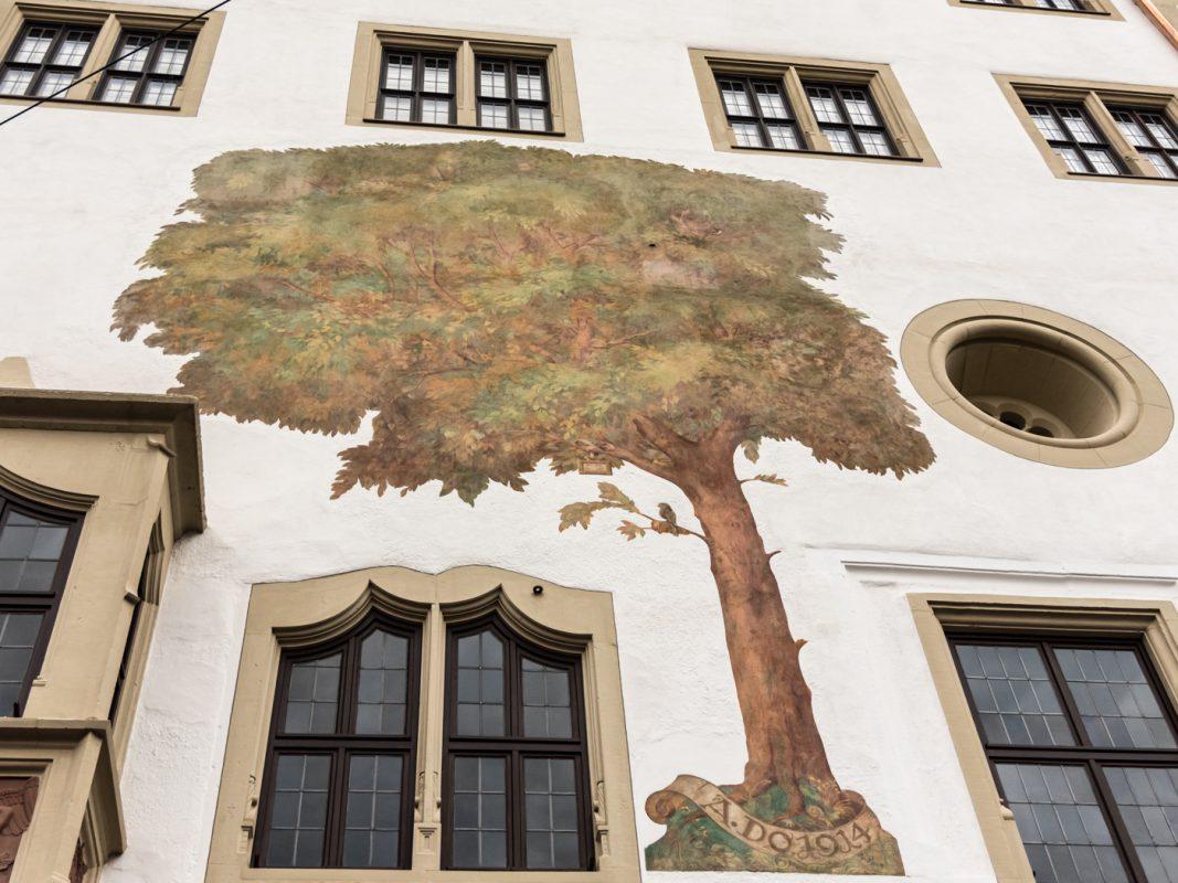 Die Gerichtslinde am Grafeneckart. Foto Pascal Höfig