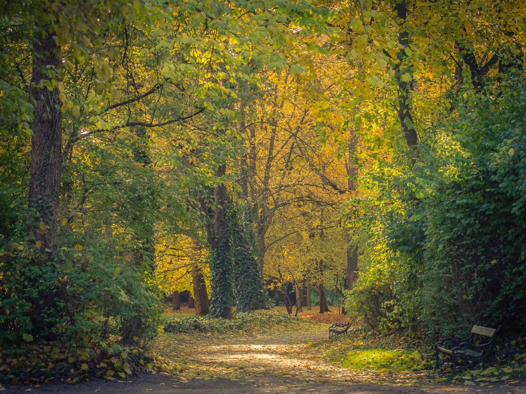 Ringpark im Herbst - Foto: Pascal Höfig