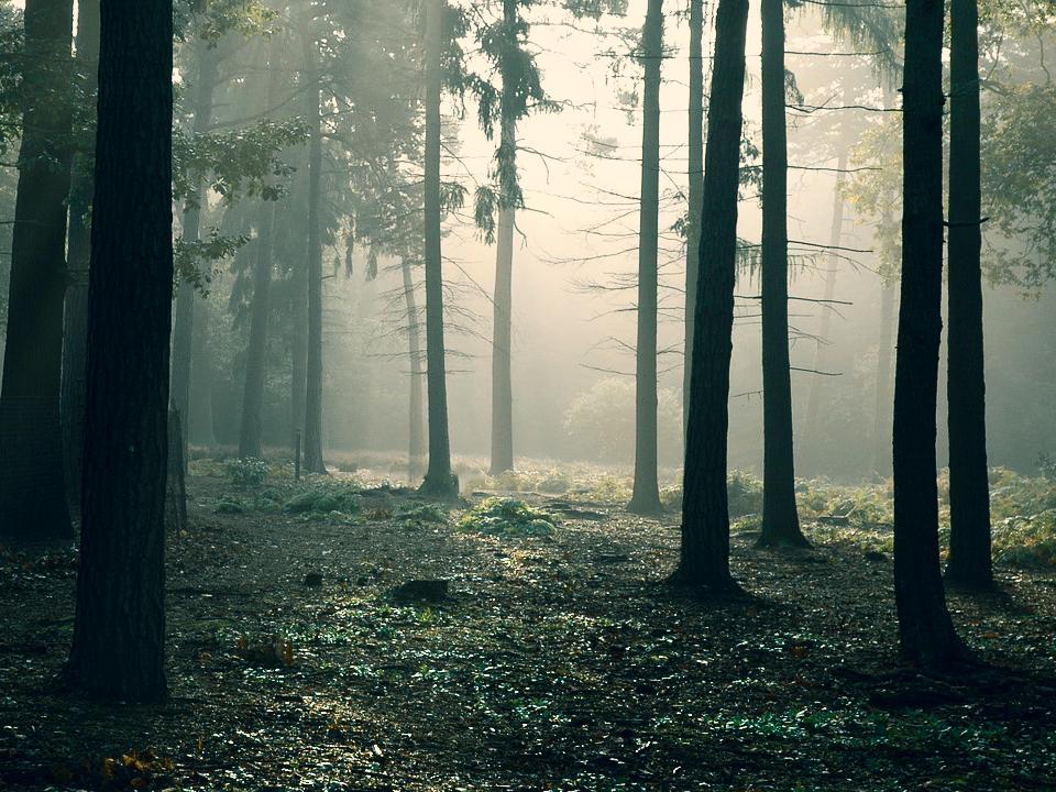 Symbolbild Wald: Pascal Höfig