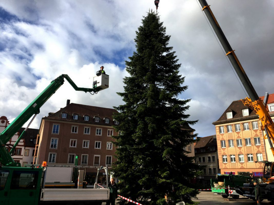 Der Weihnachtsbaum auf dem unteren Marktplatz ist aufgestellt. Foto: Anja Reichert