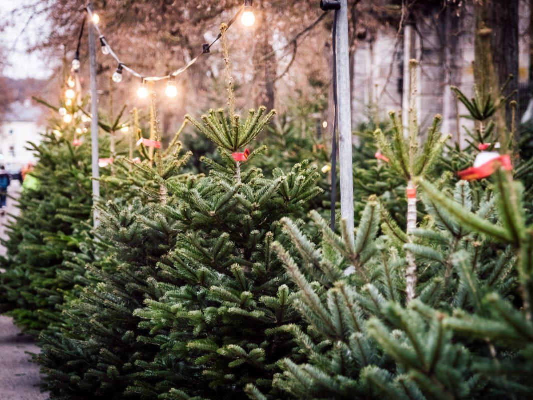 Wann Weihnachtsbaum Kaufen Map: Hier kann man in Würzburg Weihnachtsbäume kaufen   Würzburg