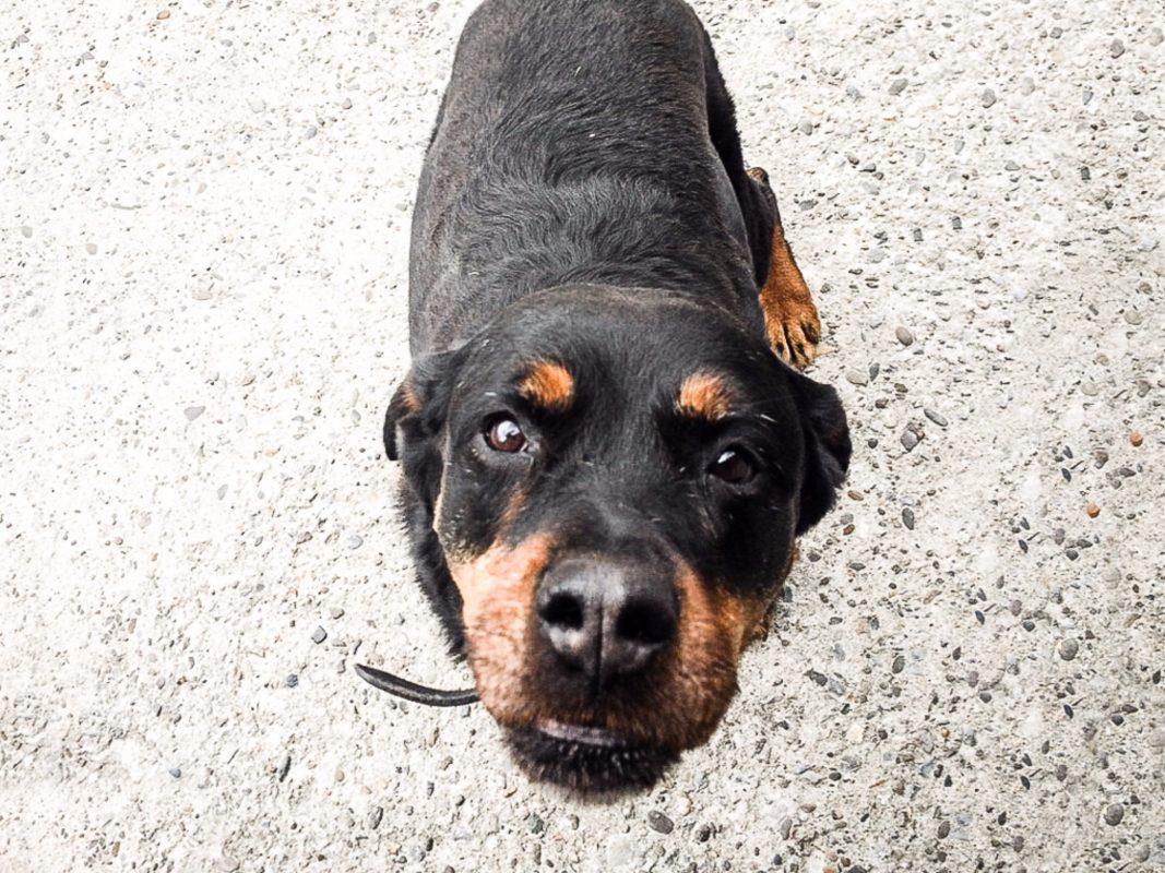 Wie kann man z.B. ohne direkten Kontakt zu Hilfebedürftigen deren Hunde ausführen? Foto: Pascal Höfig