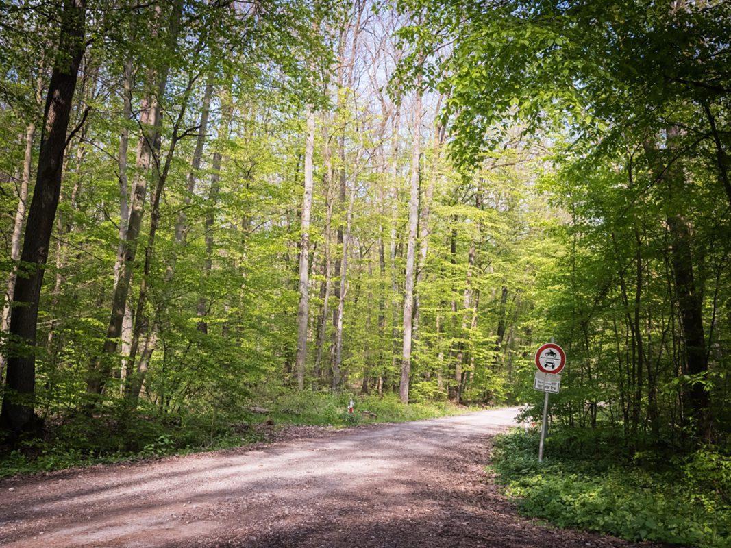 Markus Würth wird im Guttenberg Forst gefunden - an einen Baum gefesselt. Foto: Pascal Höfig