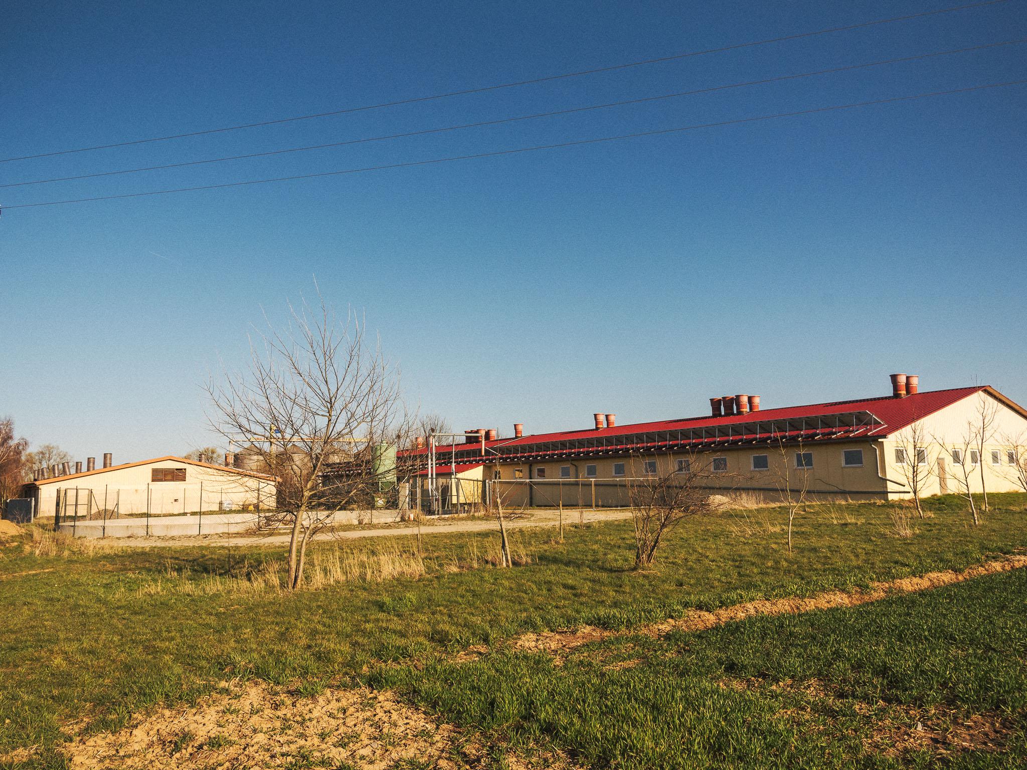 Die Mastschweineställe in Osthausen bei Gelchsheim. Foto: Pascal Höfig