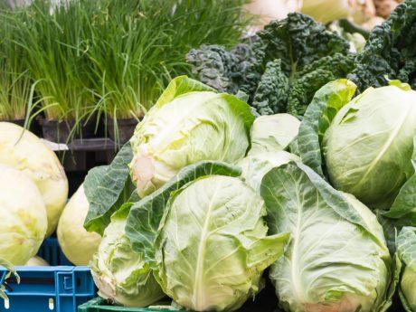 Salat und Gemüse. Foto: Pascal Höfig