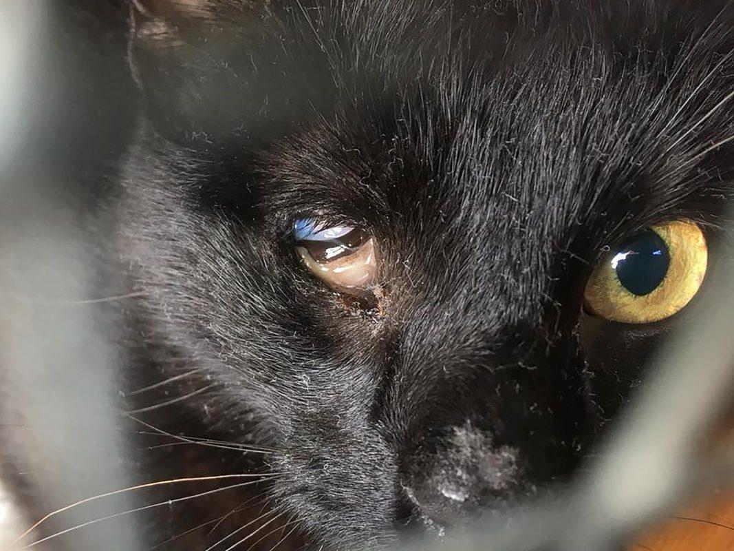 """""""Dorie"""" musste das Auge entfernt werden. Foto: Katzenhilfe Würzburg"""