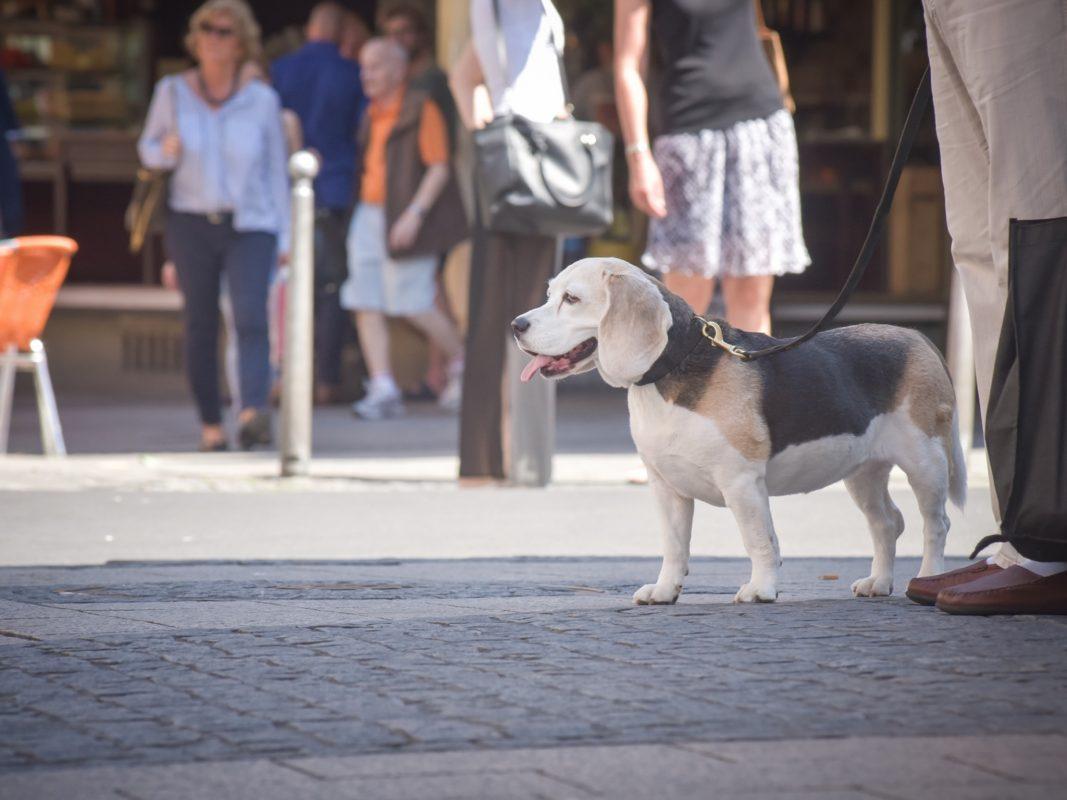 Symbolbild Hund. Foto: Pascal Höfig