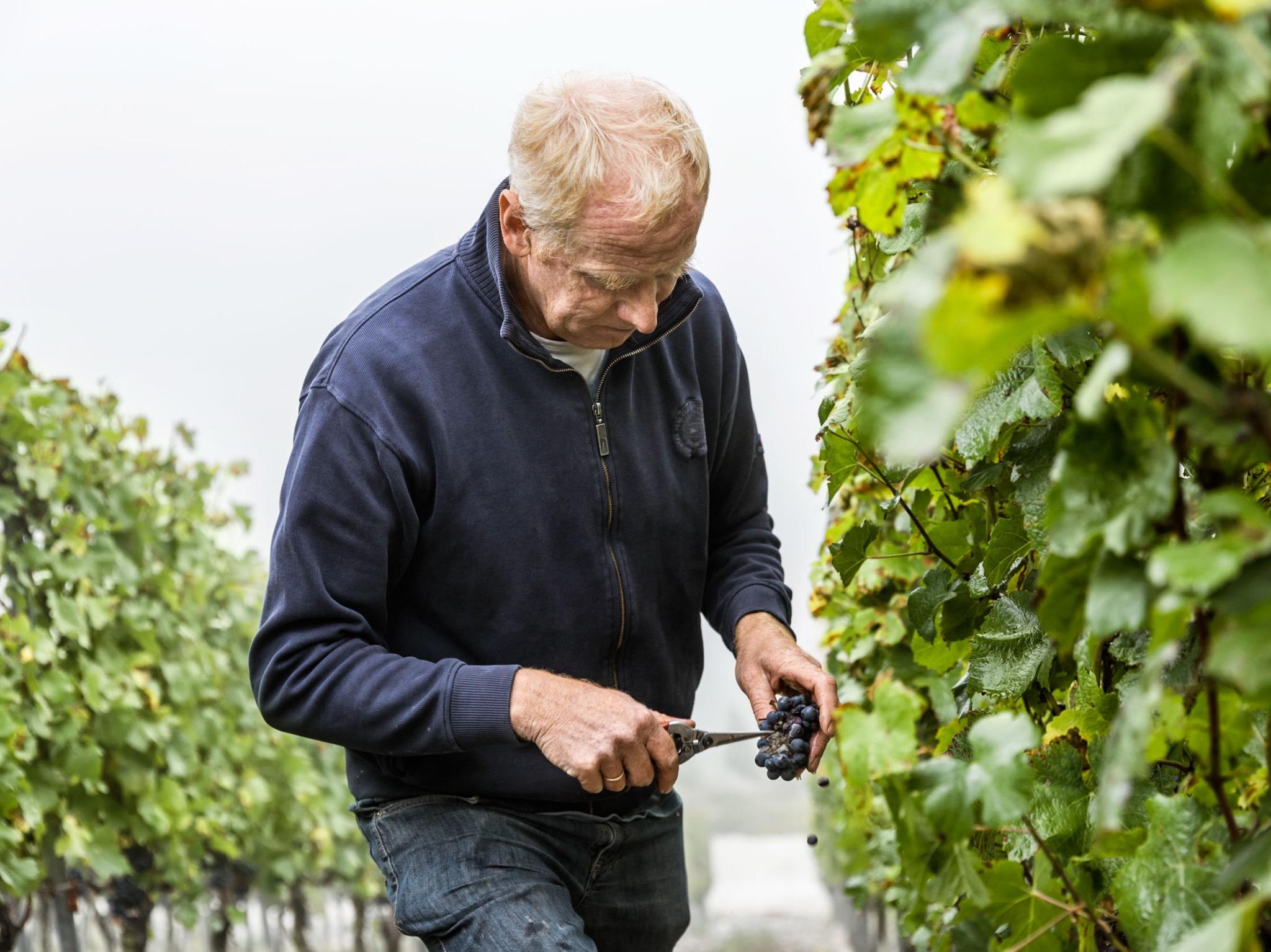 Die Weinmacher - Ein Jahr mit den fränkischen Winzern Bild: Die Weinmacher