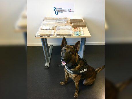 """Der unterfränkische Polizeidiensthund """"Corax"""", hatte an der Sicherstellung maßgeblichen Anteil. Foto: Polizei"""