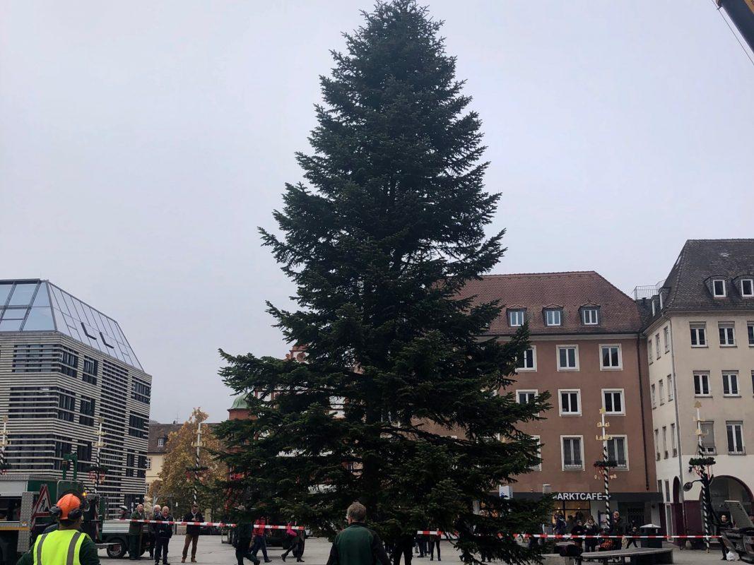 Der Weihnachtsbaum am Würzburger Marktplatz. Foto: Eva-Maria Bardutzky