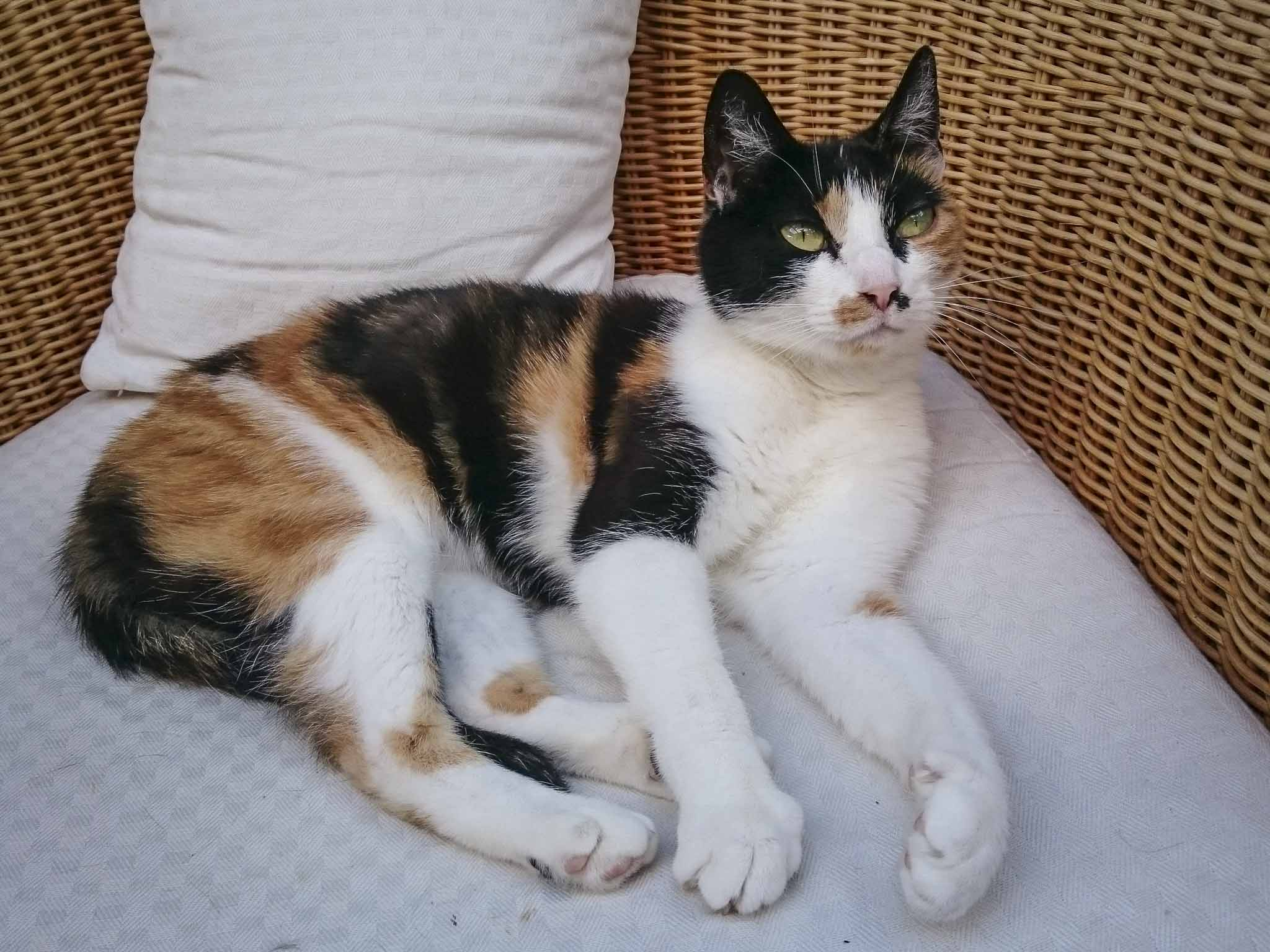 Symbolfoto Katzen. Foto: Inka