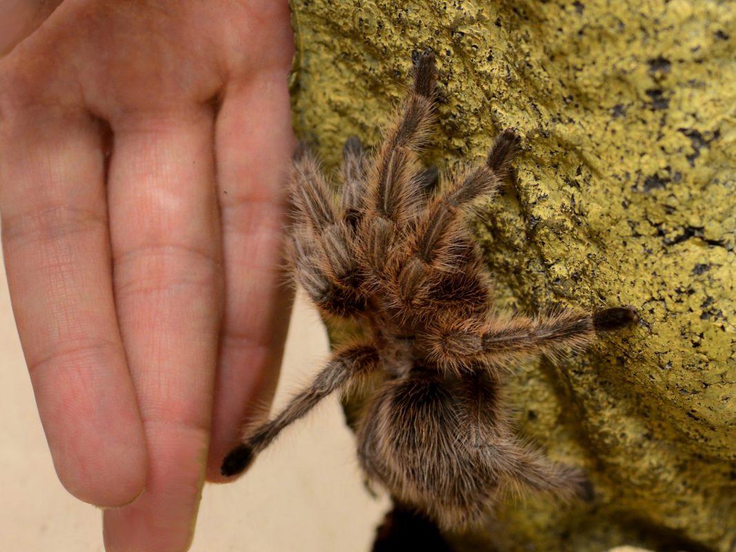 Teilnehmer mit Angst vor Spinnen gesucht! Foto: A. Stefanescu