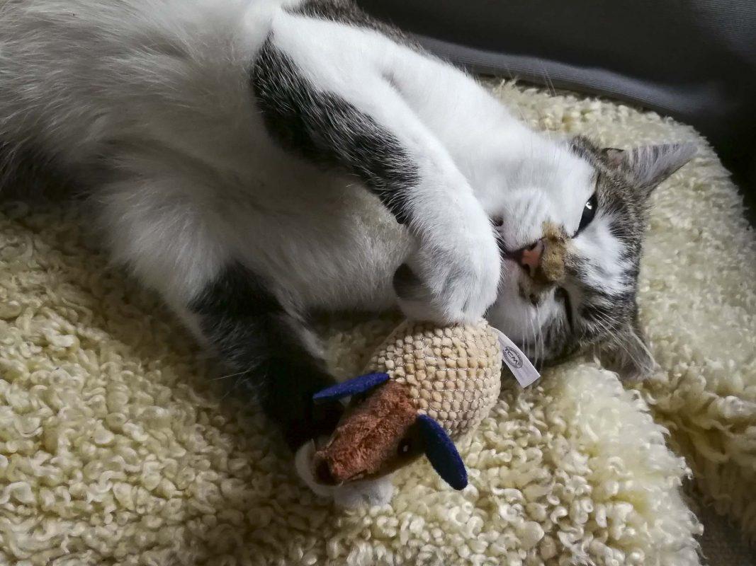 Stadt rekrutiert Katzen zur Rattenbekämpfung. Foto: B. Grimm