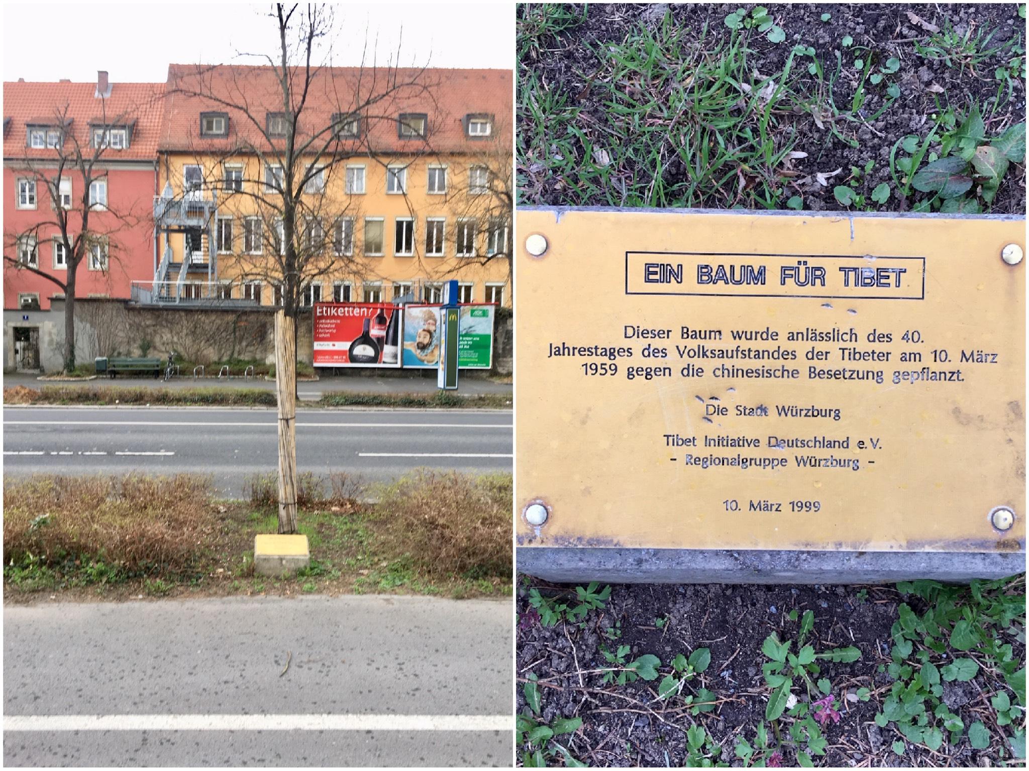 Der Tibetische Freundschaftsbaum in Würzburg. Fotos: Würzburg erleben