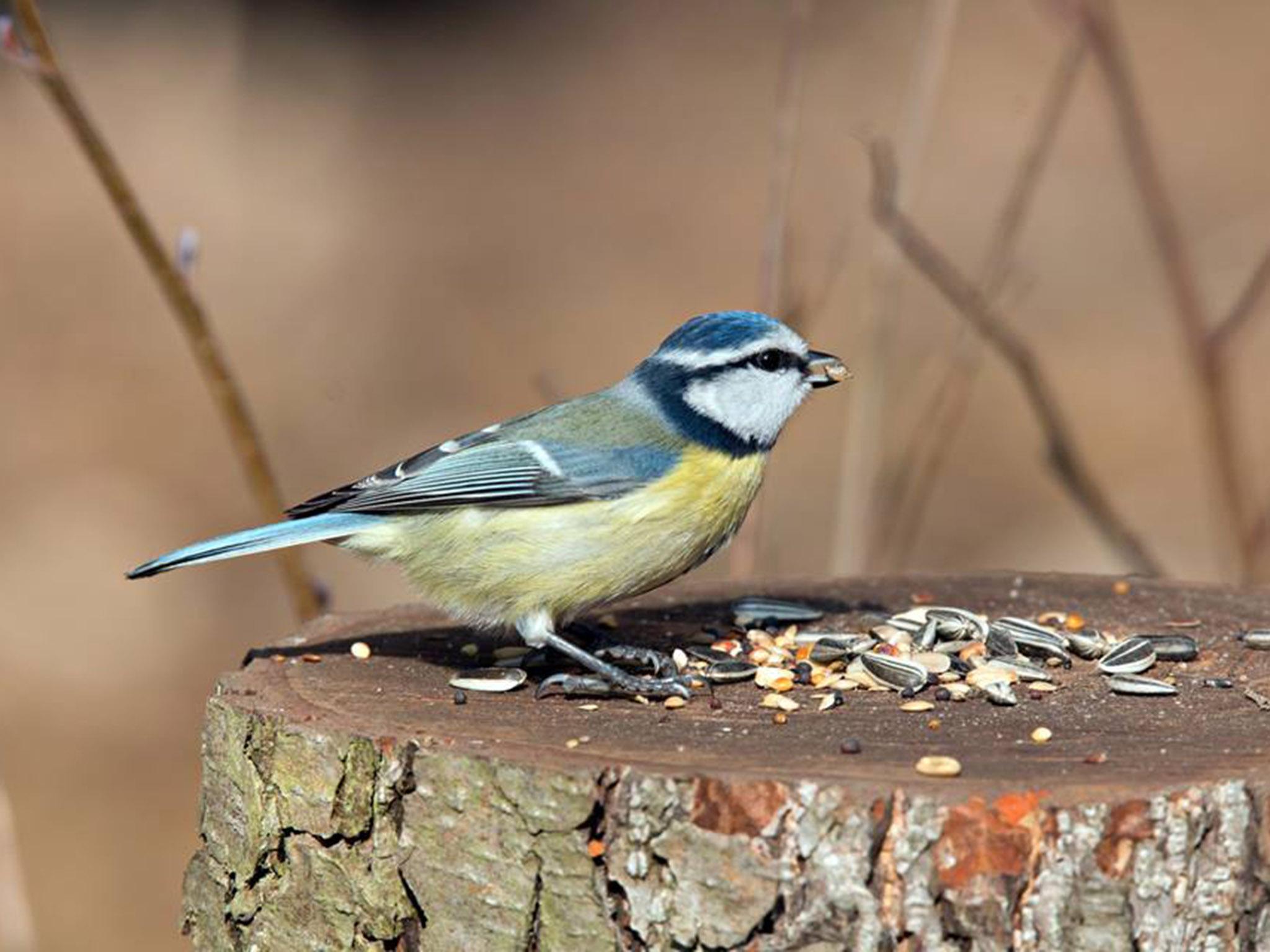 Die Crowdfunding Aktion soll mehr Schutz für die heimischen Vögel leisten. Foto: Markus Ritz.