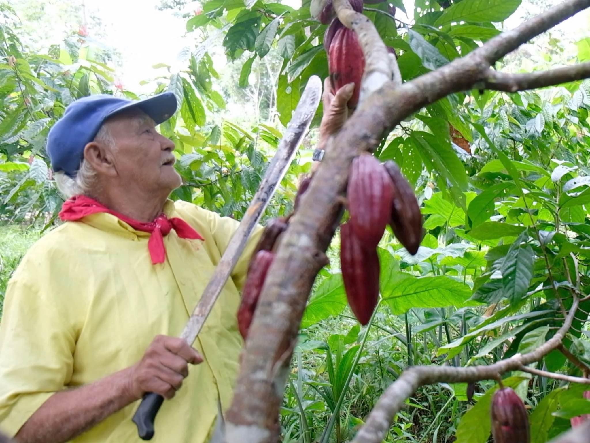 Im Dschungel konnte Mischa die Arbeit der Farmer vor Ort kennenlernen. Foto: Ela Fabienne Breuer.
