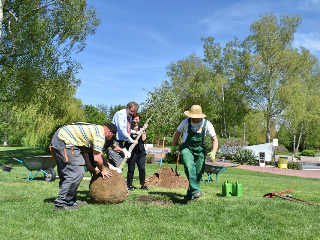Baumpflanzaktion der WVV im Dallenbergbad. Foto: Cornelia Wagner