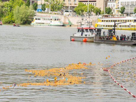 Auch dieses Jahr schwimmen wieder tausende Badeenten um die Wette. Foto: Pascal Höfig.