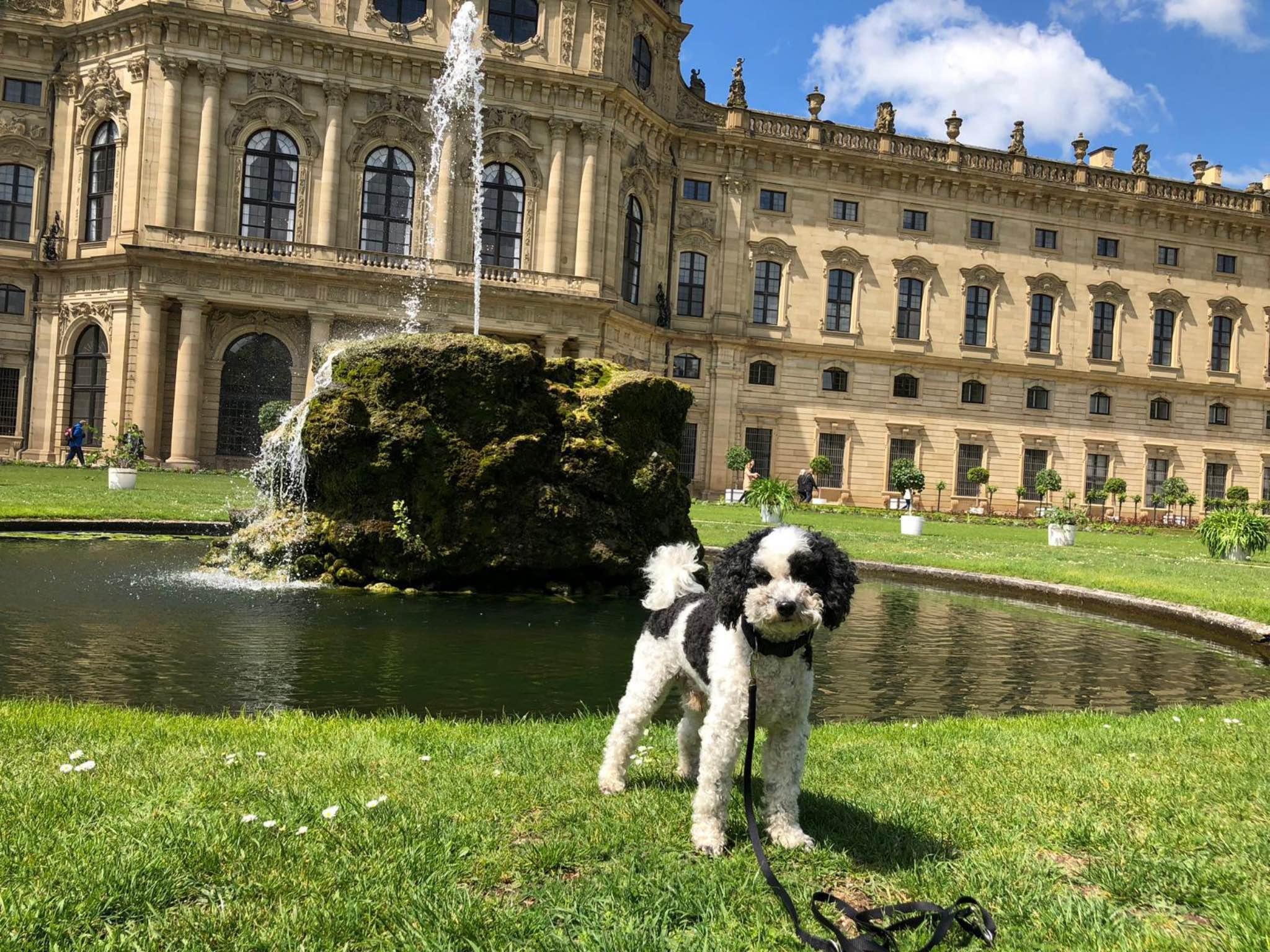 In Würzburg herrscht durchgehend Leinpflicht. Auf 8 Freilaufflächen darf man den Hund frei laufen lassen. Foto: Annika Betz.