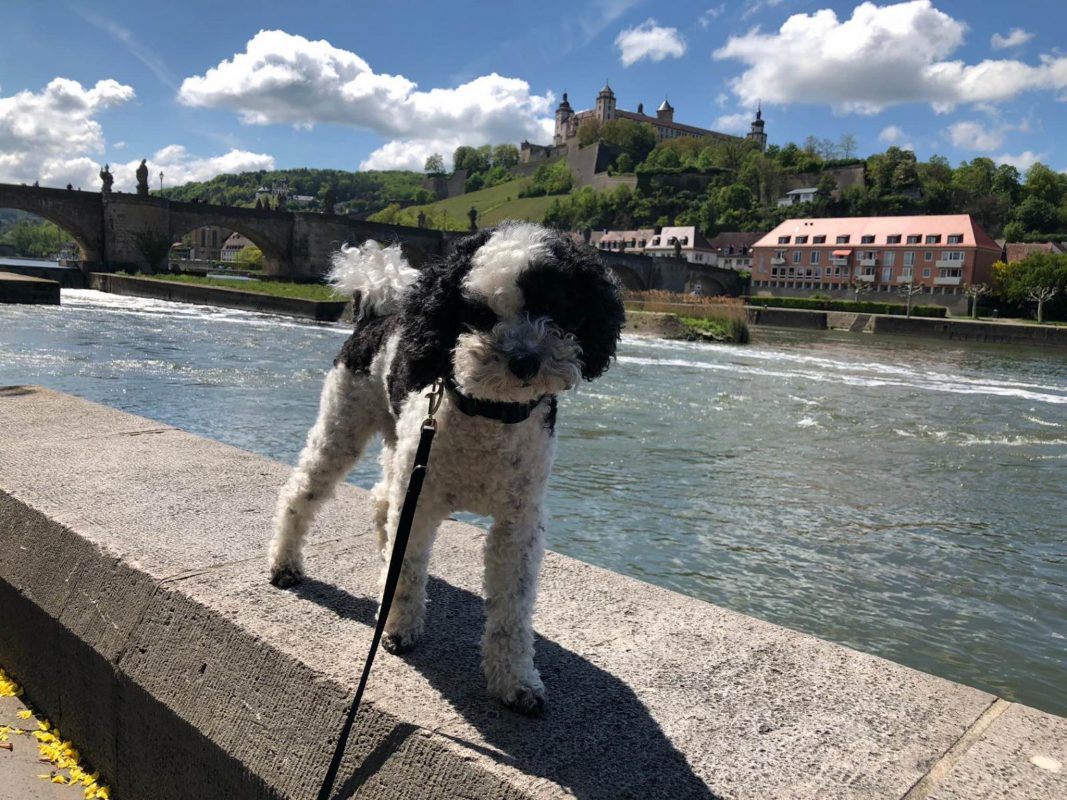 Wie hundefreundlich ist eigentlich Würzburg? Foto: Annika Betz.