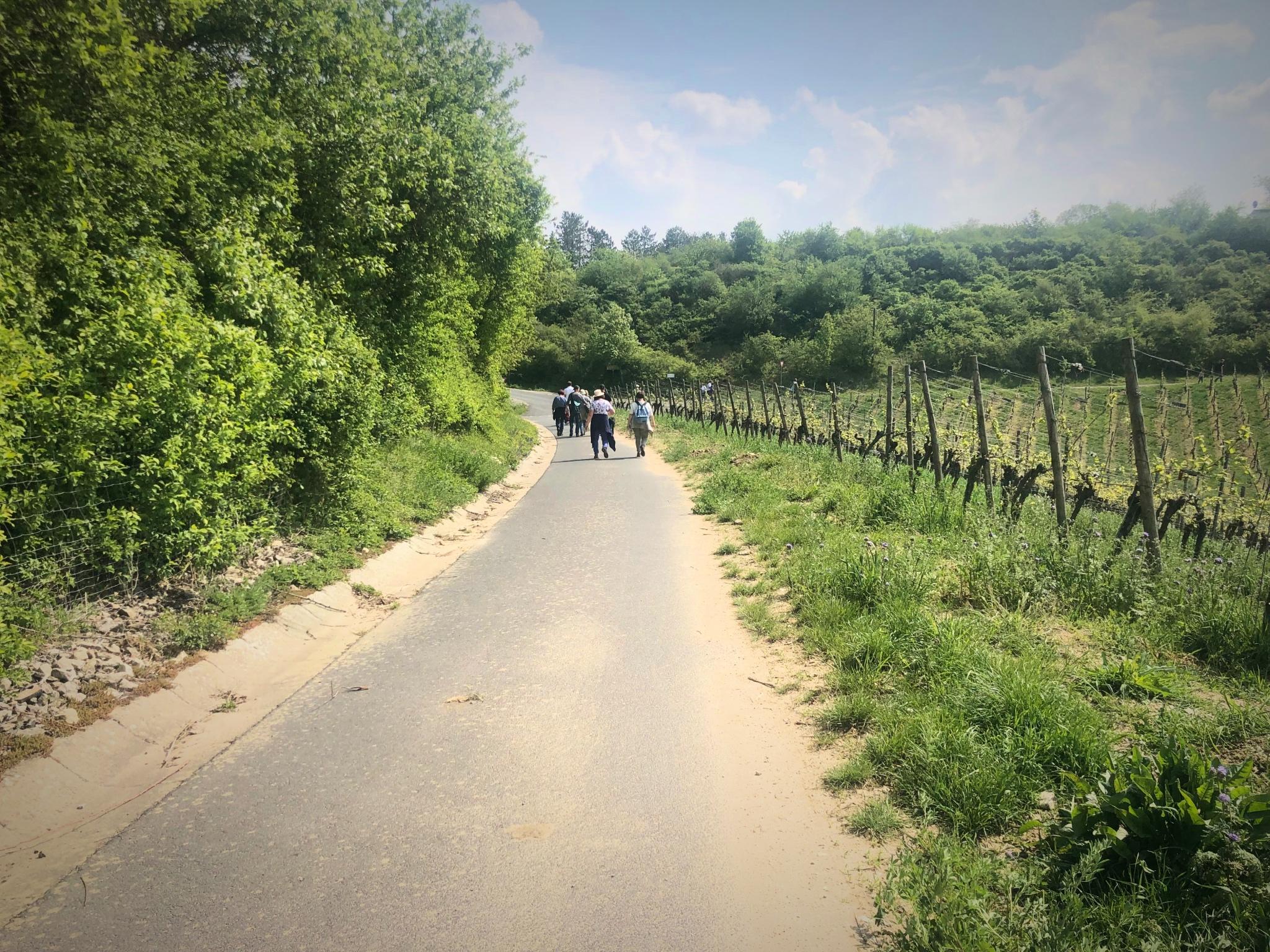 Wandern im Grünen. Foto: Melissa Schnabel