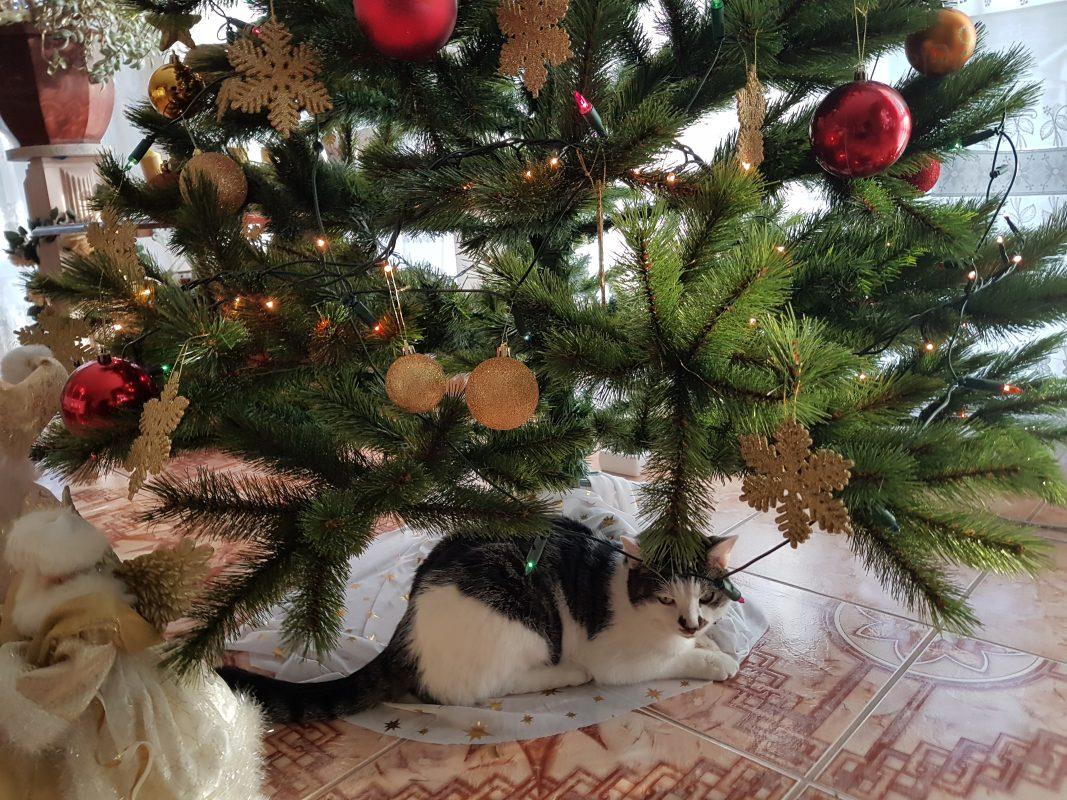 Katze unter dem Weihnachtsbaum. Foto: Diana Hisamudin