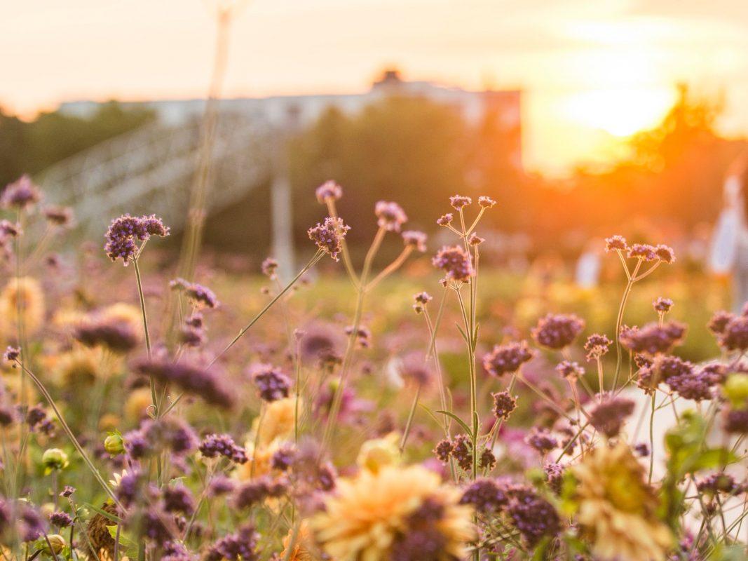 Das Landesgartenschaugelände am Hubland als malerische Kulisse: Das Kulturpicknick verspricht an 18 Abenden Festivalatmosphäre im Corona-Sommer. Foto: Marietta Jakob