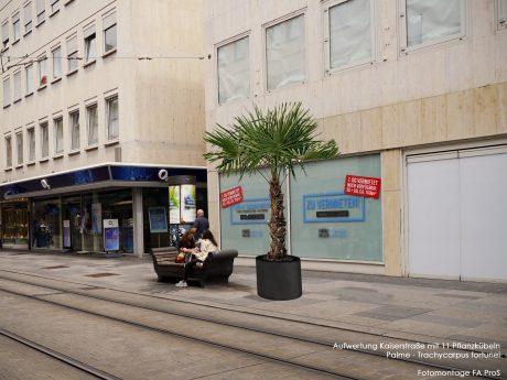 11 Pflanzenkübel mit Hanfpalmen sollen die Kaiserstraße verschönern. Fotomontage: FA ProS/ Stadt Würzburg Baureferat Tiefbau