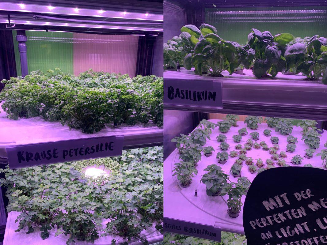 Indoor Gardening im Frischemarkt Trabold. Foto: Frischemärkte Trabold