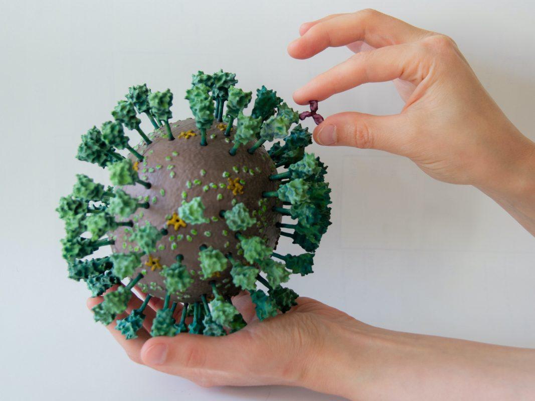 Das 3D-Modell des neuen Coronavirus SARS-CoV-2 und eines Antikörpers, 1.000.000-fach vergrößert. Foto: Rudolf-Virchow-Zentrum/ JMU Würzburg