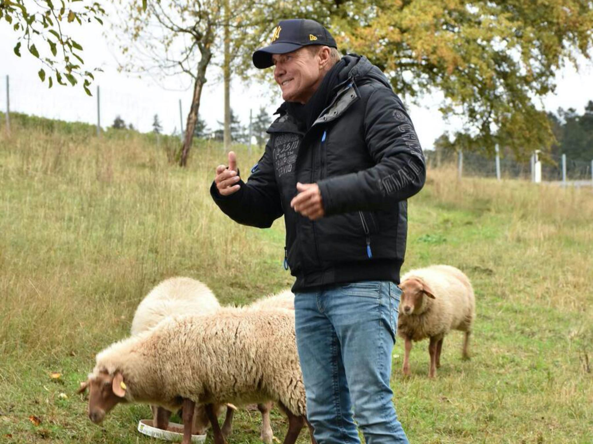 Auch die Schafe haben es dem Poptitan angetan. Die Jury bei den Dreharbeiten von DSDS in Wertheim. Foto: Landratsamt Main-Tauber-Kreis