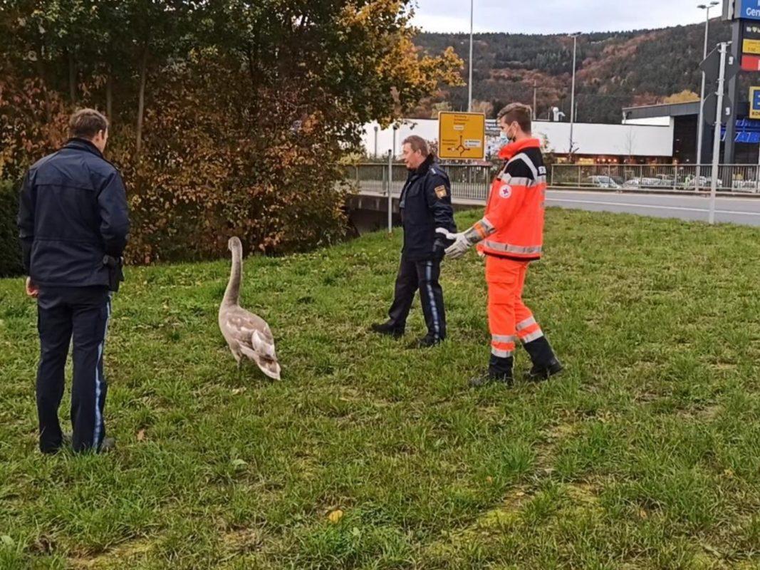 Tierretter im Einsatz. Foto: Horst Huber