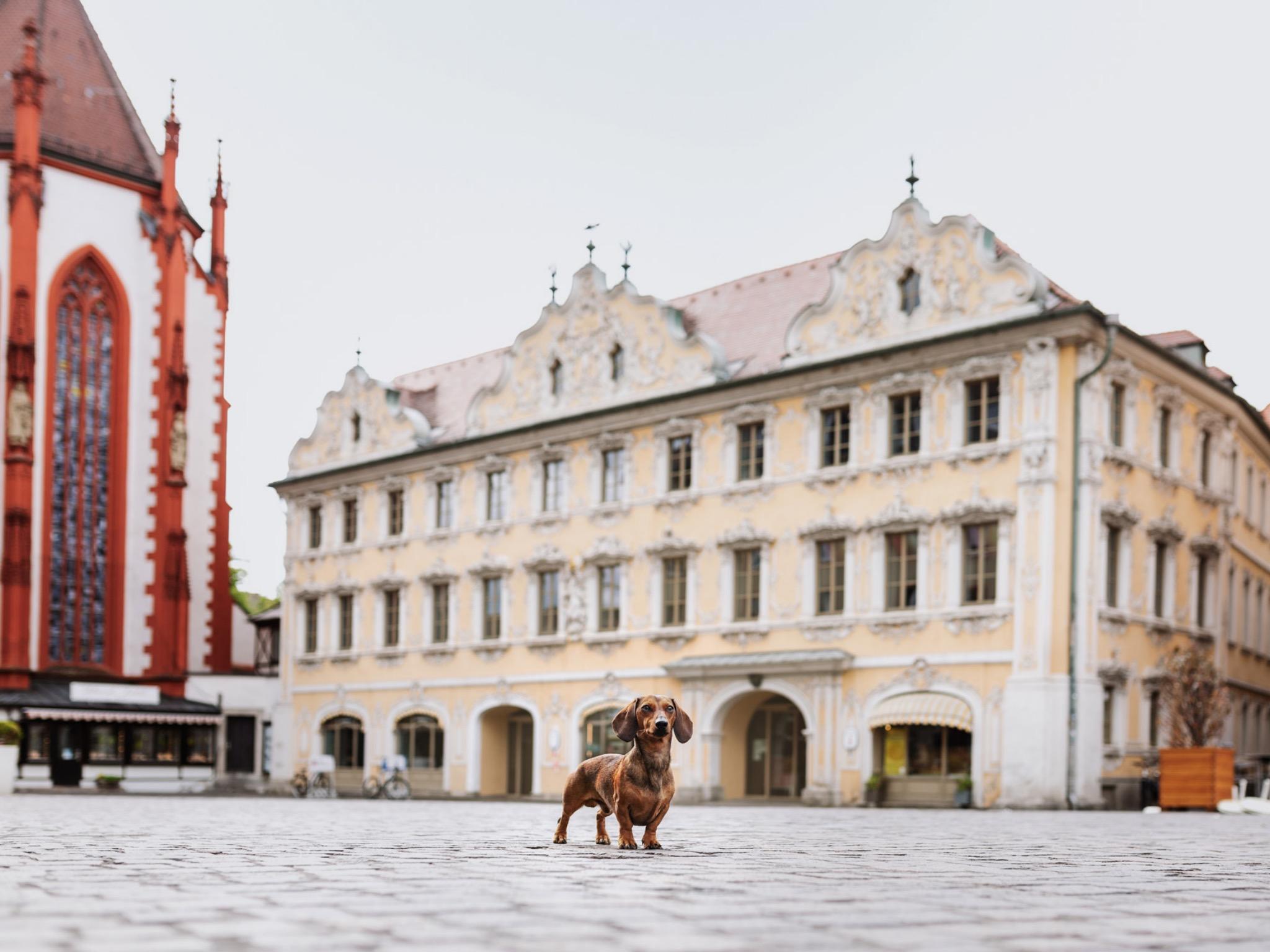 Der Zwergdackel Bruno vor dem Falkenhaus. Foto: Yasemin Ikibas