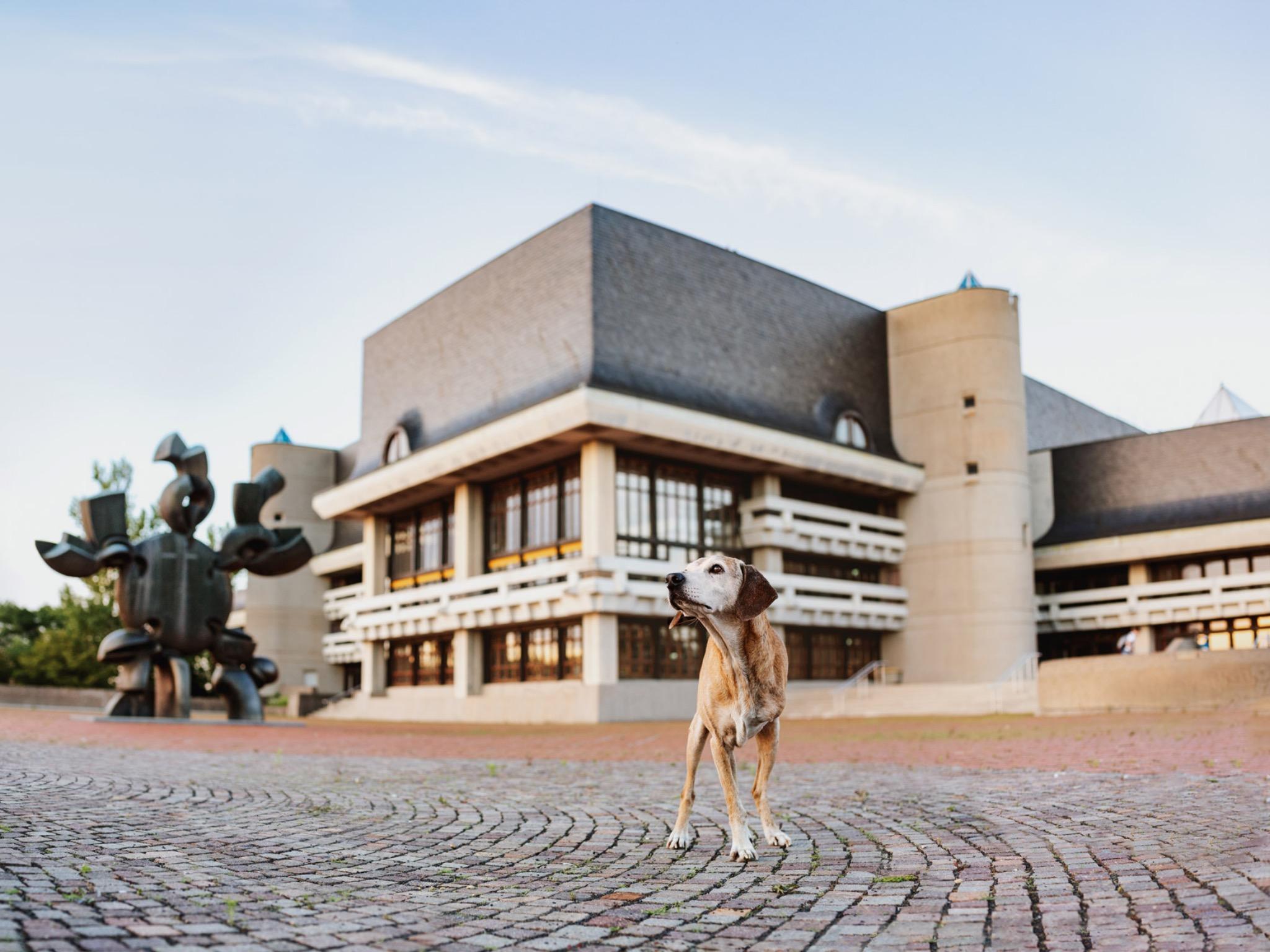 Der Hundeherr Mato vor der Uni-Bibliothek am Hubland. Foto: Yasemin Ikibas
