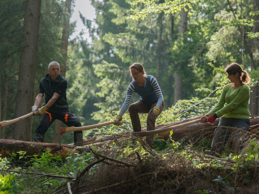 Im Wald tatkräftig mit anpacken. Foto: Bergwaldprojekt e.V.