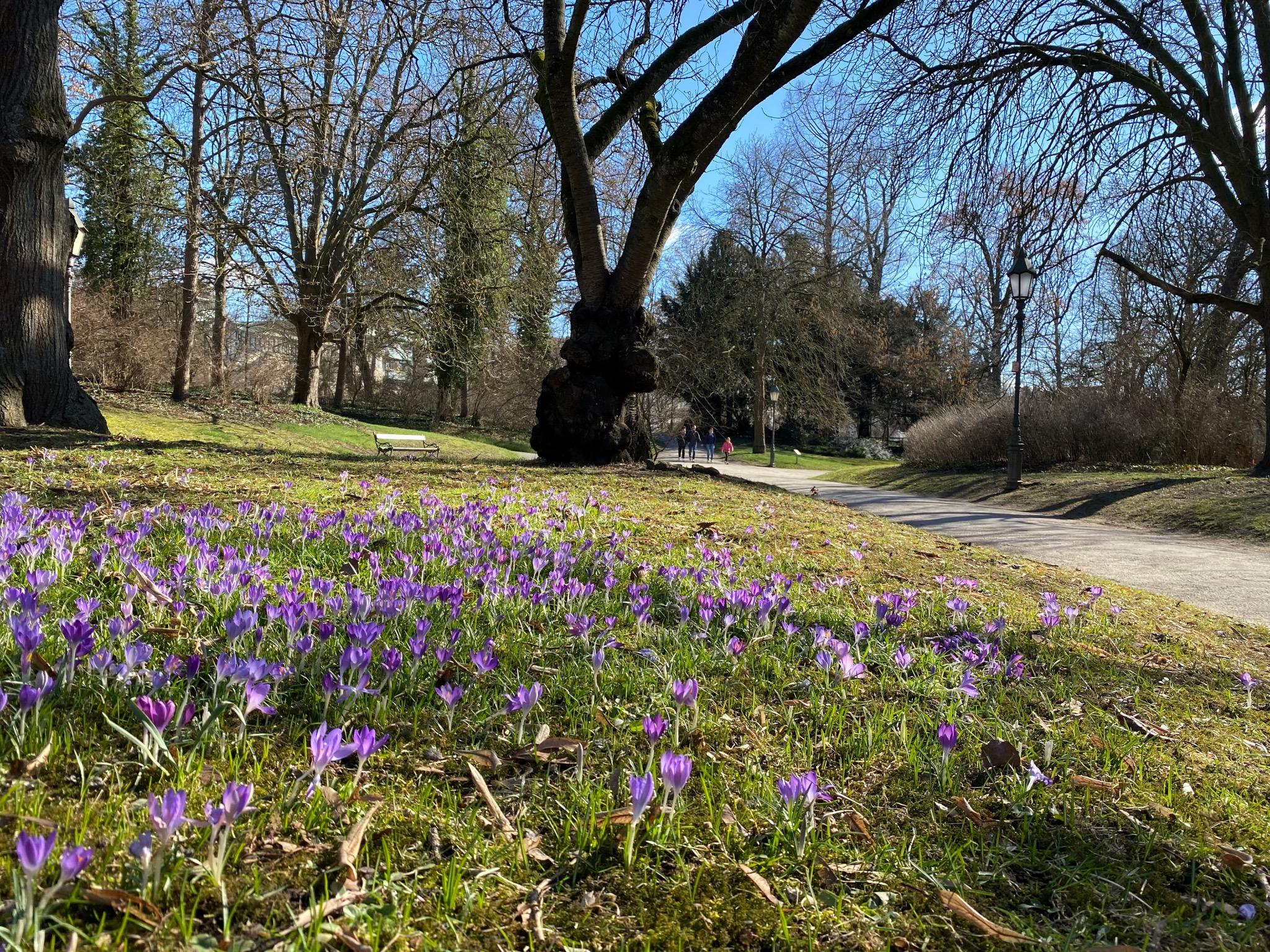 Erste Blümchen gab es schon Anfang März im Ringpark. Foto: Jessica Hänse