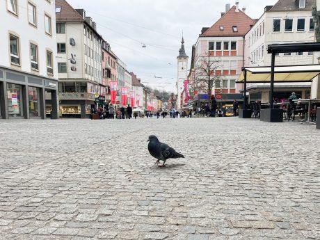 Stadttaube in der Innenstadt. Foto: Jessica Hänse
