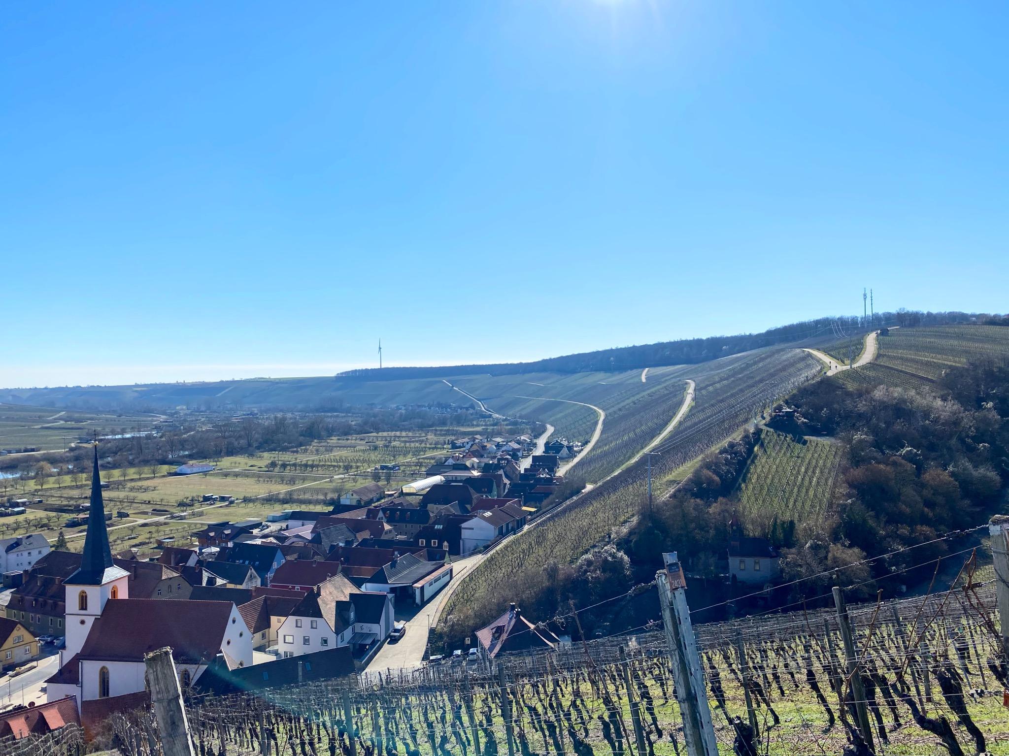 Blick über die Weinberge und Escherndorf im März. Foto: Jessica Hänse