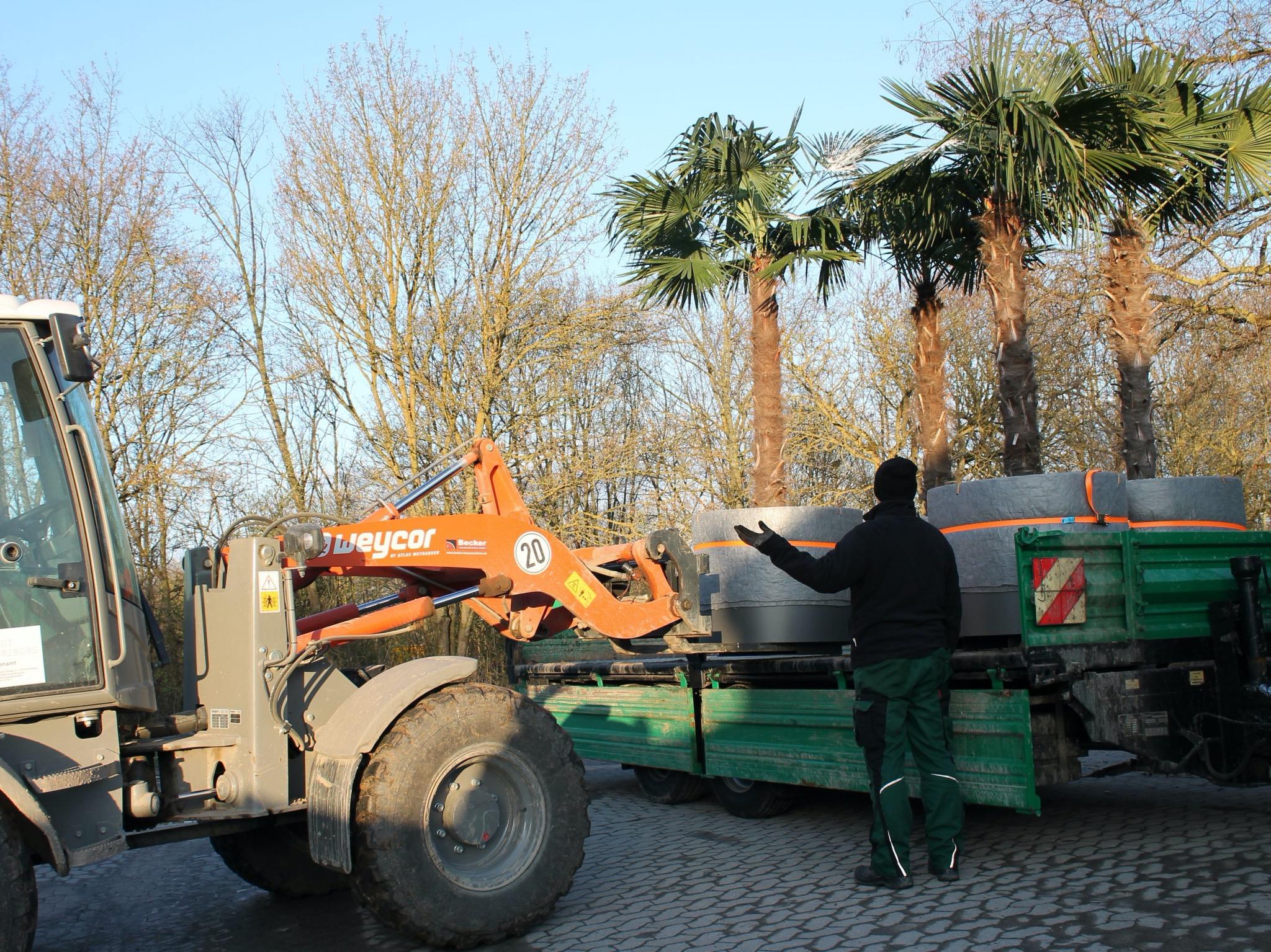 Die Palmen machen sich auf die Reise! Gartenamtsmitarbeiter Martin Schömig und Holger Reim transportieren die Pflanzkübel vom Winterquartier in die Kaiserstraße. Foto: Gartenamt/ Regina Höger