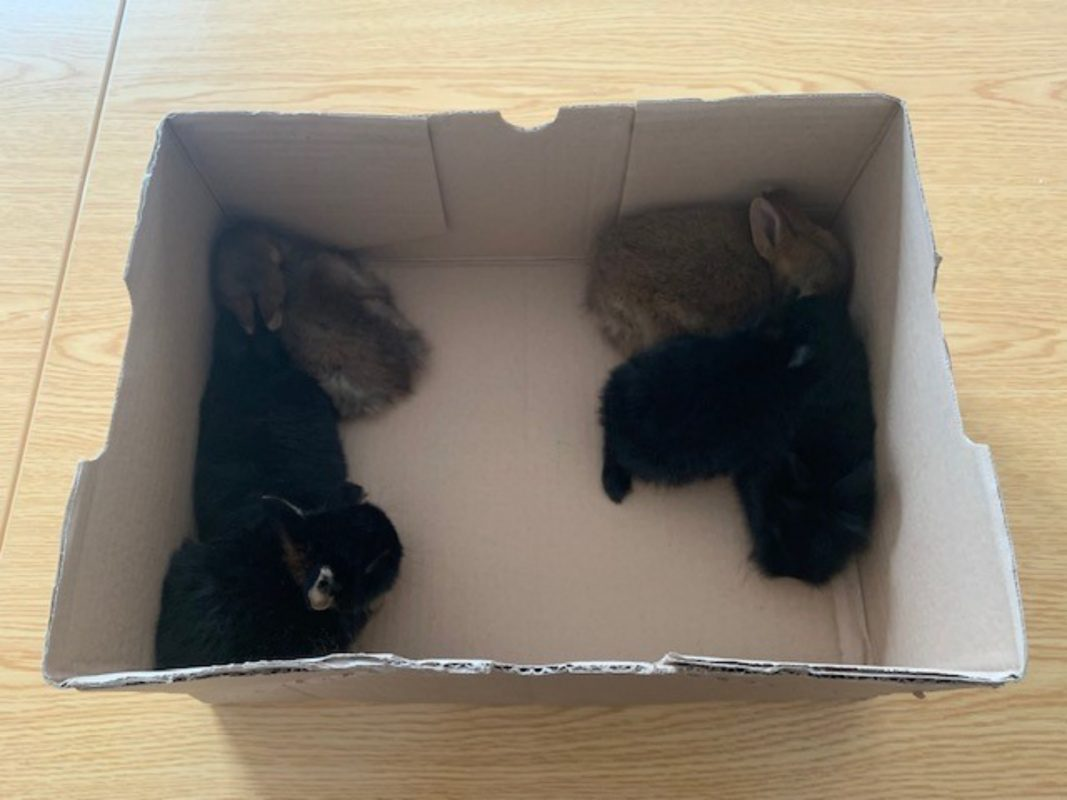 Die sechs kleinen Häschen wurden an das Veterinäramt übergeben. Foto: Bundespolizei
