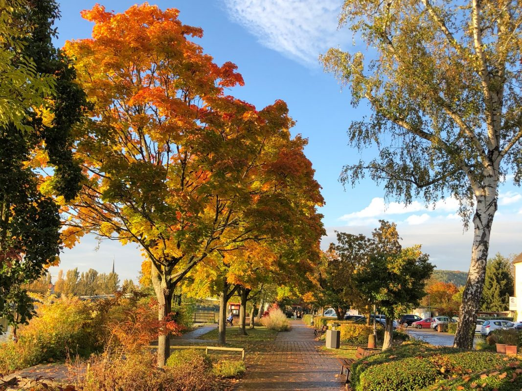 Herbstfarben an der Mainlände Veitshöchheim. Foto: Tourist-Information Veitshöchheim